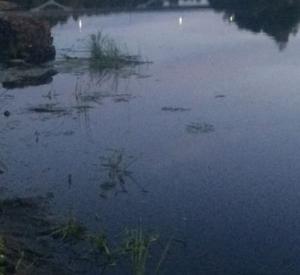 В Смоленской области из водоемов подняли два трупа