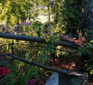 В Смоленской области кладбище завалило деревьями (фото)