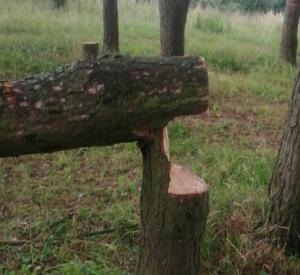 Неизвестные у Солдатского озера вырубили деревья