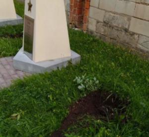 Неизвестные выкопали туи в сквере Памяти героев