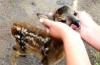 В смоленском приюте для животных загрызли оленёнка