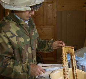 В Смоленске пасечники получат единые ветеринарно-санитарные паспорта (видео)