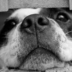 Хозяина пса, который напал на смолянку, оштрафовал суд
