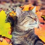 Прогноз погоды на первое октября, четверг