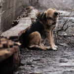 Власти опровергли отстрел бездомных животных в деревне под Смоленском