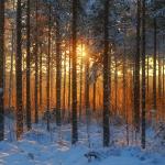 Прогноз погоды на воскресенье, 23 февраля