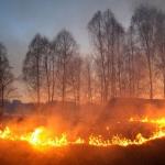 В Смоленской области зафиксировано более пятисот случаев палов травы