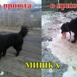 Несчастных собак морили голодом в Дорогобужском приюте