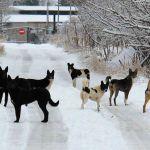 Видео: Бродячие псы – опасность для жителей
