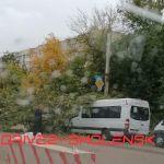 В Смоленске дерево рухнуло на маршрутку