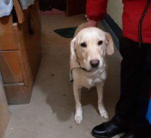 Хозяина собаки Джесси убили. Полиция просит помощи смолян