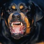 Под Смоленском агрессивная собака накинулась на детей