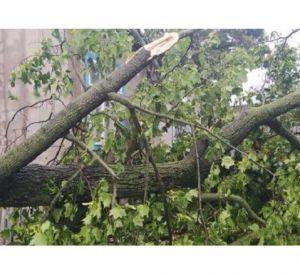 В Смоленске сильный ветер повалил деревья
