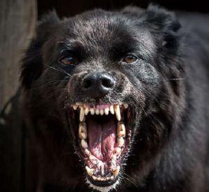 В микрорайоне Смоленска собака набросилась на женщину с питомцем