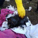 В Смоленской области кошка погибла, попав в яму с мазутом