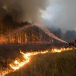 В Смоленске начали привлекать к ответственности поджигателей травы