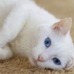 «Сердце разрывается». По Смоленском неизвестный расстреливает котов