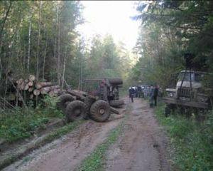 В Смоленской области задержали незаконных лесорубов