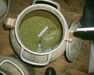В Смоленске задержали преступников, занимавшихся изготовлением и сбытом марихуаны