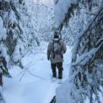 Браконьер застрелил оленя в Смоленский области