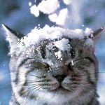 Прогноз погоды на субботу, 1 декабря