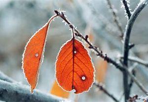 Морозы в Смоленск пришли ненадолго