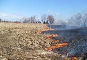 У жительницы Смоленской области сгорела дача из-за пала травы