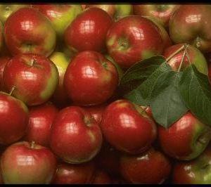 На Смоленщину прибыли яблоки с пестицидами