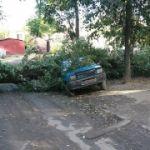 В Смоленске тополь раздавил «Оку»