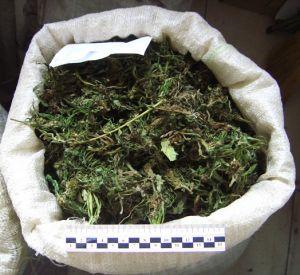 В Смоленске задержали крупную партию марихуаны