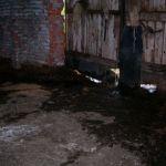 Сафоновский суд временно закрыл ферму за антисанитарию