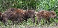 В Смоленской области активизировались браконьеры