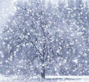 В Смоленской области из-за снегопада без света остались больше девяти тысяч человек