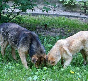 Смоленские власти больше не будут отлавливать бродячих собак