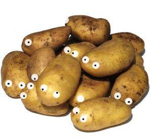 В двух районах Смоленщины объявлен картофельный карантин