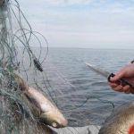 Ярцевчанин лишился 70 тысяч рублей, съездив на рыбалку