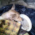 Горожане спасли от гибели бездомного пса (фото)