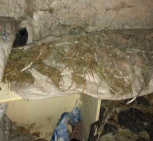 Житель Смоленской области прятал в подвале «дурь»