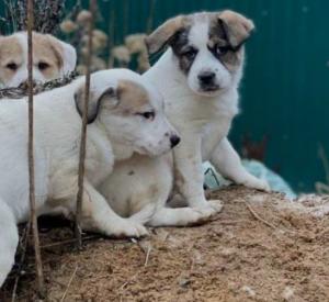 Жительница Смоленщины подыскивает дом маленьким щенкам