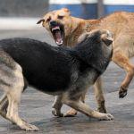 На горожан нападают стаи бездомных собак
