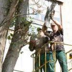 Улицу Тимирязева в Смоленске закроют на один день из-за обрезки деревьев