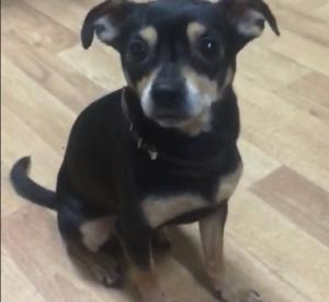 У жительницы Смоленска украли собаку в кафе