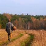 В кардымовском лесу найден «грибник» с пулей в голове
