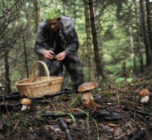 Еще один смолянин потерялся в лесу